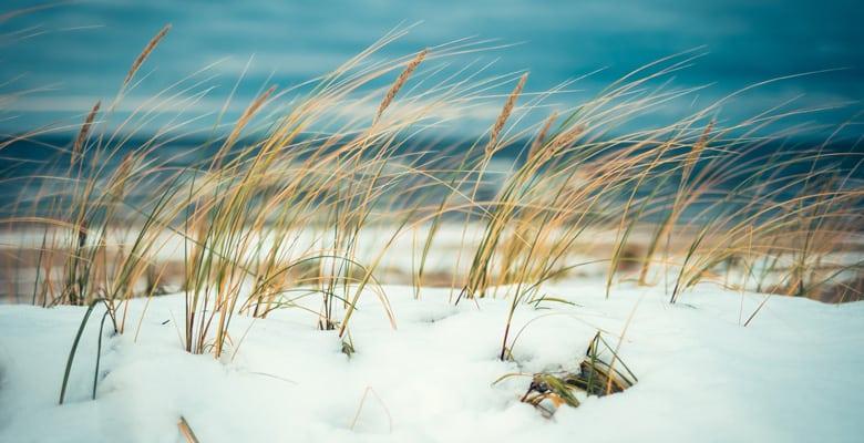 Gratis-uitjes-kerstvakantie---Winter-strandwandeling
